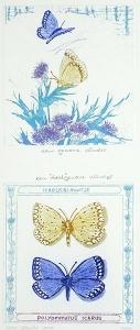 """Een gewone vlinder, een """"dood""""-gewone vlinder, 14 x 33, ets/aquatint, € 75,-"""