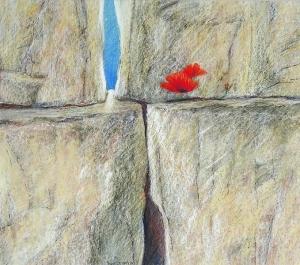 Sterker dan steen  IV, (zandsteen, klaproos), 42 x 48, pastel, € 325,-