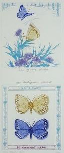 """een gewone vlinder, een """"dood"""" gewone vlinder, 14 x 33, ets/aquatint, € 70,-"""
